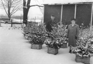 Roy and Daisy Tilden in front of their barn, 1947. The spruce trees were dug by their son Herbert and placed in apple boxes for replanting after Christmas. At that time live trees were more popular than cut ones.