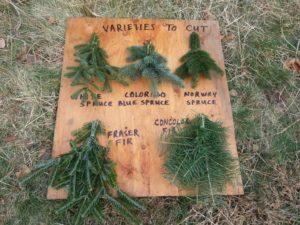 Our 2014 Varieties