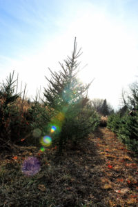 A backlit Christmas Tree grows in a field.