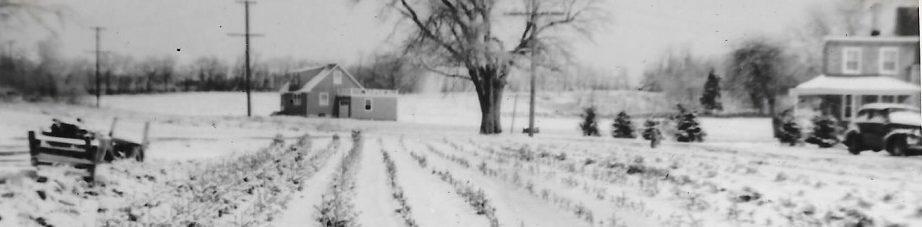 Tilden Lane Farm
